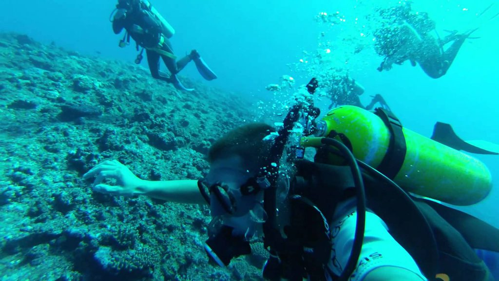 Scuba Diving Tour (1Dive - Inner Reefs )